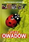 Atlas owadów250 polskich gatunków Twardowski Jacek, Twardowska Kamila
