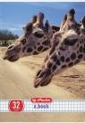 Zeszyt A5 x.book w kratkę 32 kartki Animals