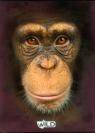 Zeszyt A5 Wild w kratkę 80 kartek Małpa