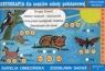 Dysortografia Zeszyt 1 Ortografia dla uczniów szkoły podstawowej spółgłoski miękkie