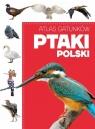 Atlas gatunków Ptaki Polski Praca zbiorowa