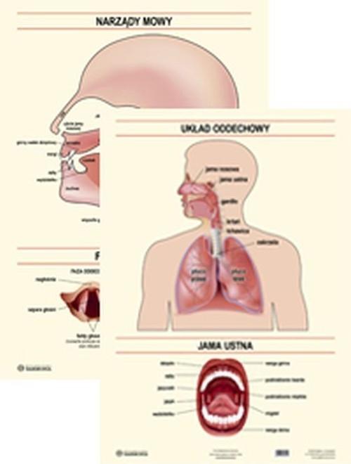 Plansza Narządy mowy Układ oddechowy