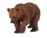 Niedźwiedź brązowy młody S