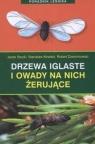 Drzewa iglaste i owady na nich żerujące Stocki Jacek, Kinelski Stanisław, Dzwonkowski Robert