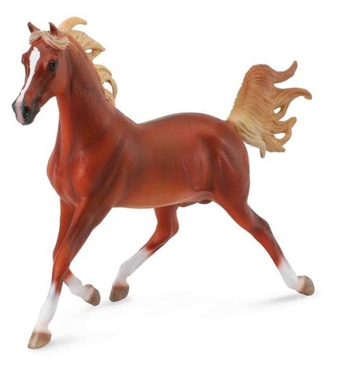 Koń arabski stallion chestnut (89461)