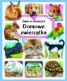 Domowe zwierzątka. Świat w obrazkach