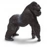 Goryl, samiec (14661)