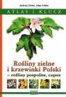 Atlas i klucz. Rośliny zielne i krzewinki Polski praca zbiorowa