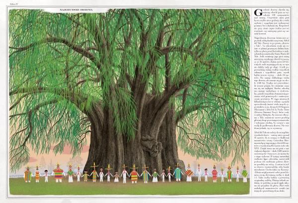 Drzewa Grajkowski Wojciech