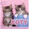 Kalendarz 2022 Ścienny Koty ARTSEZON praca zbiorowa