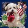 Pocztówka 3D Świąteczny Pies