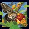 Pocztówka 3D - Motyl