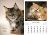 Kalendarz planszowy 2021 - Koty 7