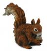 Wiewiórka czerwona jedząca