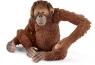 Orangutan samica - 14775