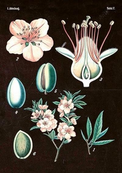Karnet ST267 B6 + koperta Magnolia różowa