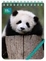 Kołonotes ozdobny Giant Panda Baby (RNP 505)