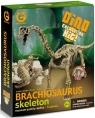 Wyprawa Paleontologiczna - Brachiosaurus