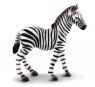 Zebra źrebię M