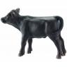 Angus czarne cielę - 13768