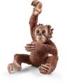 Młody orangutan - 14776