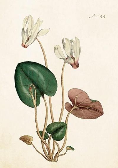 Karnet ST268 B6 + koperta Kwiat wiśni