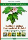 Rośliny zielne i krzewinki Polski rośliny pospolite, częste Atlas i klucz Urbisz Andrzej, Urbisz Alina
