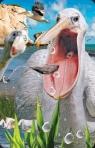 Minikartka 3D - Pelikan