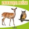Zwierzęta leśne Szewczyk Małgorzata