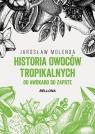 Historia owoców tropikalnych. Od awokado do zapote