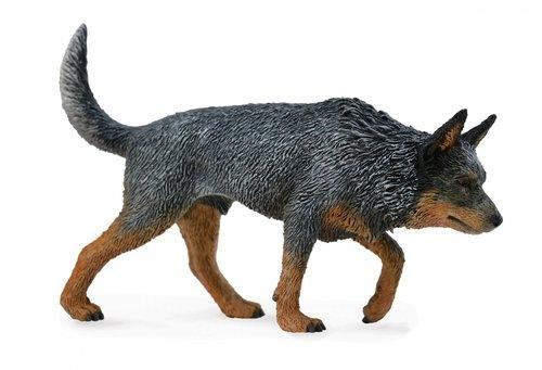 Pies rasy cattle australijski