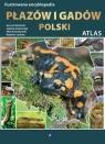 Ilustrowana encyklopedia płazów i gadów Polski  Gierliński Gerard, Grabowsk