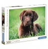 Puzzle HQC 500: Chocolate Puppy (35072)Wiek: 10+