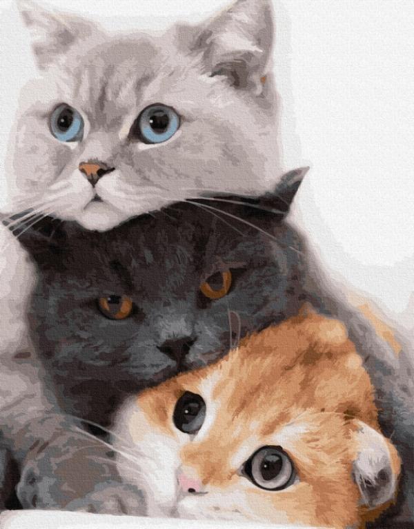 Obraz Malowanie po numerach 3 koty (GX34826)