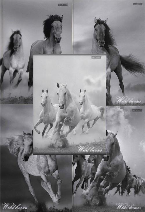 Zeszyt A5 Top-2000 w linie 60 kartek Wild horses mix