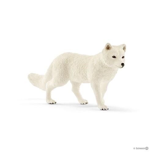 Lis arktyczny - 14805
