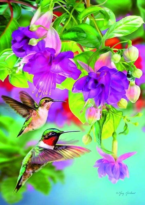 Puzzle 1000 Kolibry