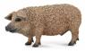 Świnia węgierska M (004-88674)