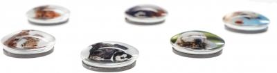 Magnes Fun&Joy PIES I KOT okrągły - mix śr. 30 mm