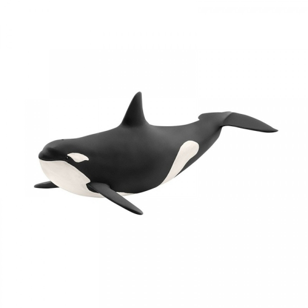 Orka oceaniczna - 14807