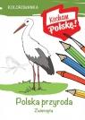 Kolorowanka. Polska przyroda zwierzęta