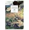 Dinosaurs A Journey to the Lost Kingdom Argot Christtine, Vives Luc