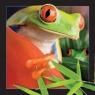 Pocztówka 3D Żaba