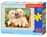 Puzzle Golden Retriever Pups 60 elementów (06786)