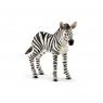 Zebra, źrebię - 14811