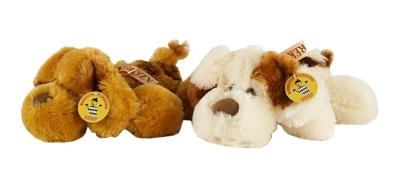 Pies leżący łaciaty