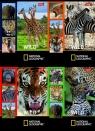 Zeszyt A5 National Geographic w kratkę 32 kartki 15 sztuk mix