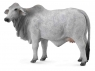 Krowa brahman L