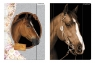 Starpak, teczka z gumką A4 Sweet Horses (298952)