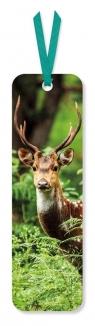 Zakładka do książki Chital Deer